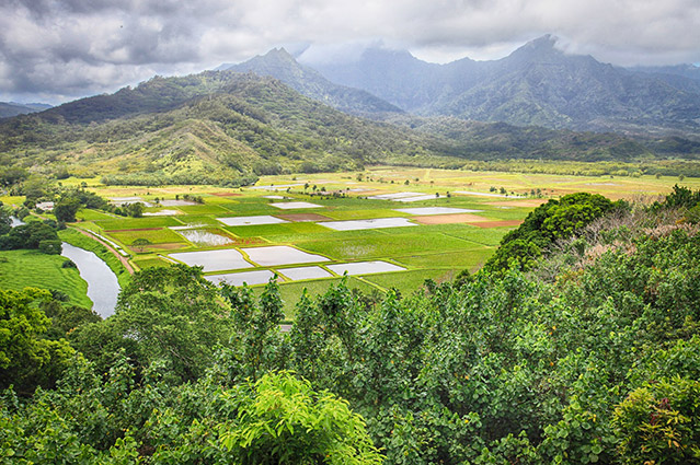 view over hanalei