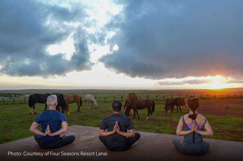 zen-horse-sunset-yoga